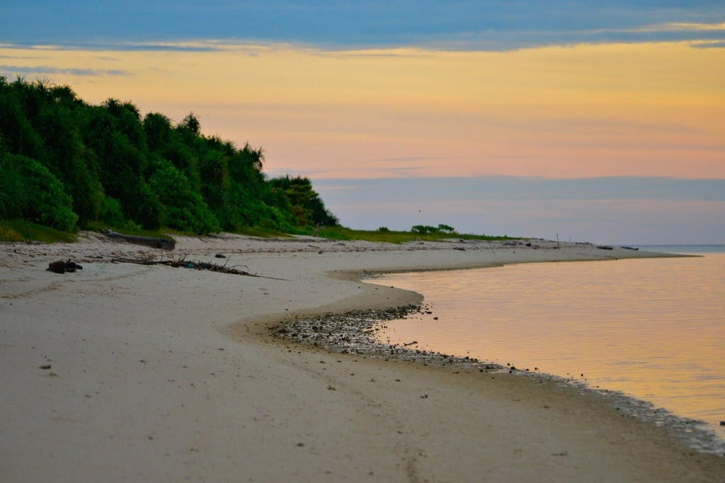 From dusk 'til dawn: birding at Ursula island will reward you day in day out