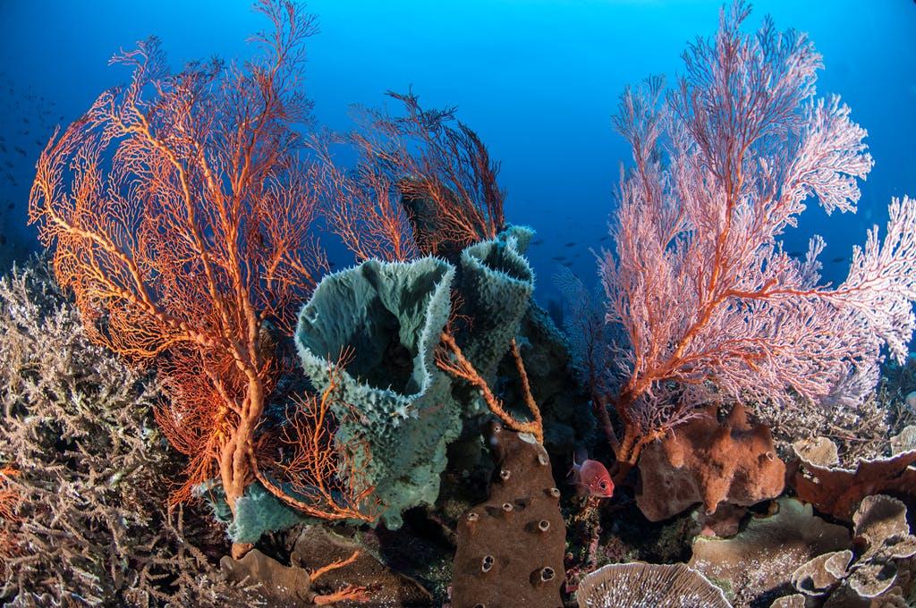 Gutsy's Reef in Sarangani