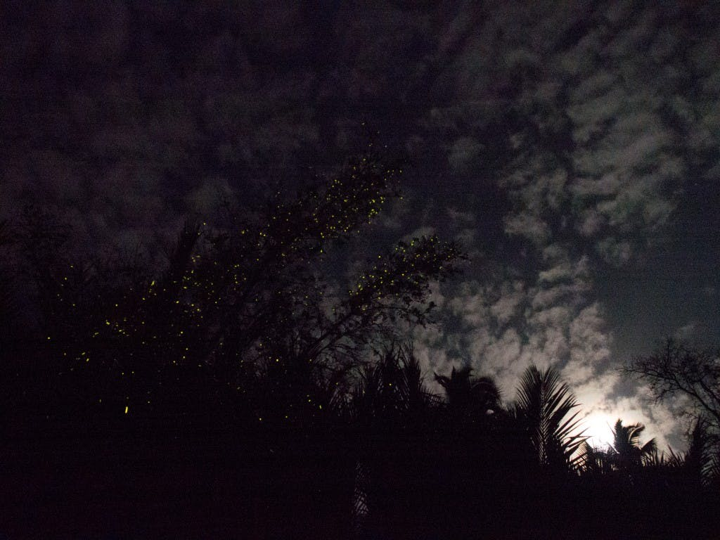 Fireflies and a great big full moon compete for our attention