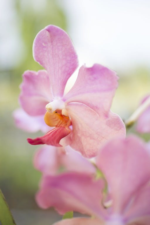 A homegrown orchid at Yoki's Farm