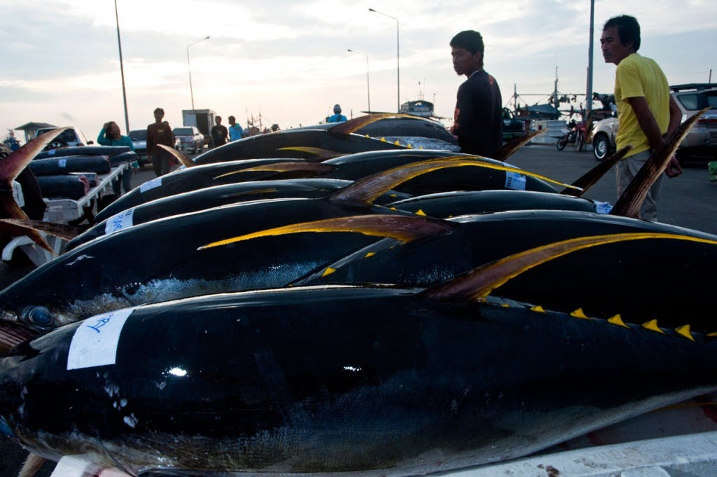 Tuna fishes in General Santos City By Edwin Espejo. Pinched from gensantimes.com