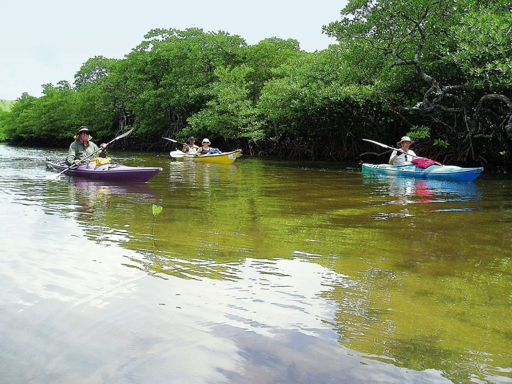 Kayaking through mangroves